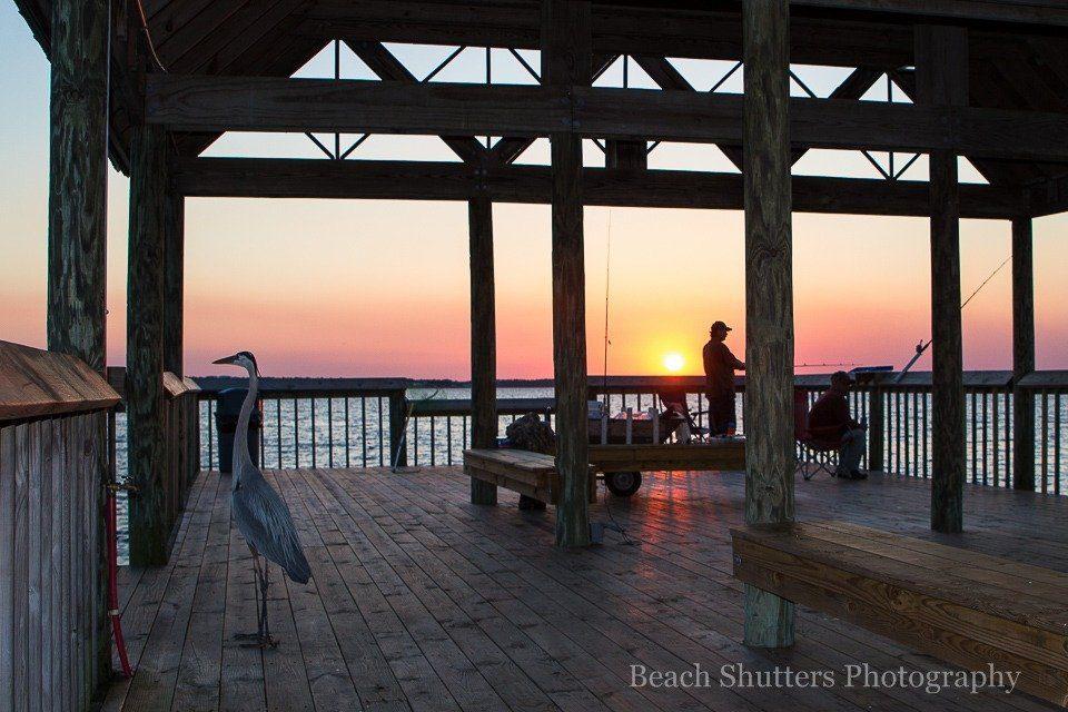 Blue Heron on the pier. Waterfront Park in Orange Beach on Wolf Bay