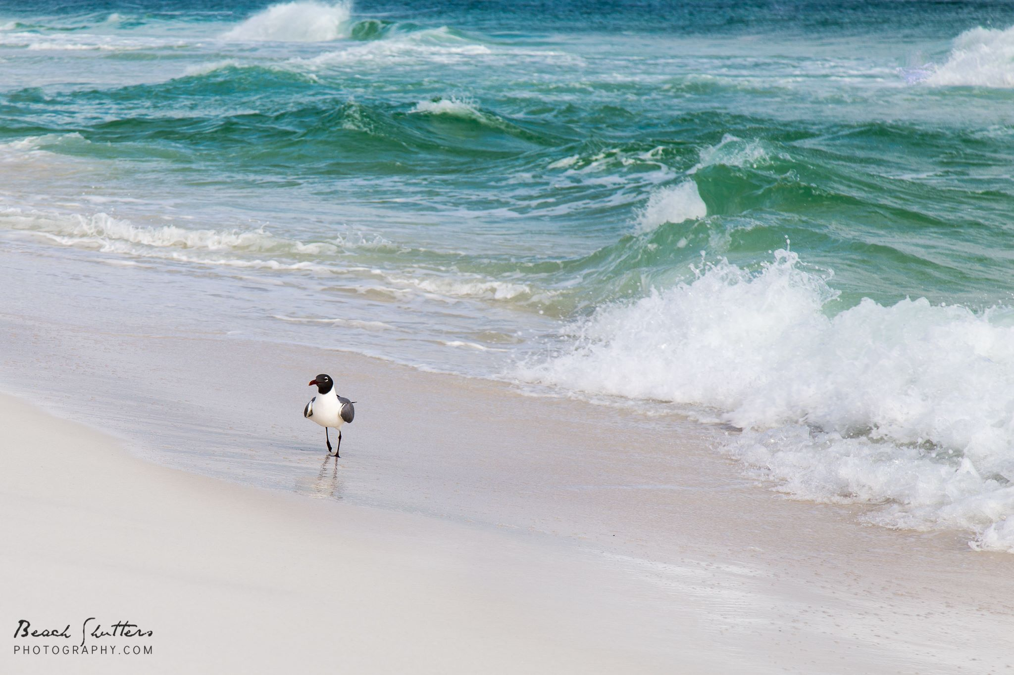 nature photography in Orange Beach