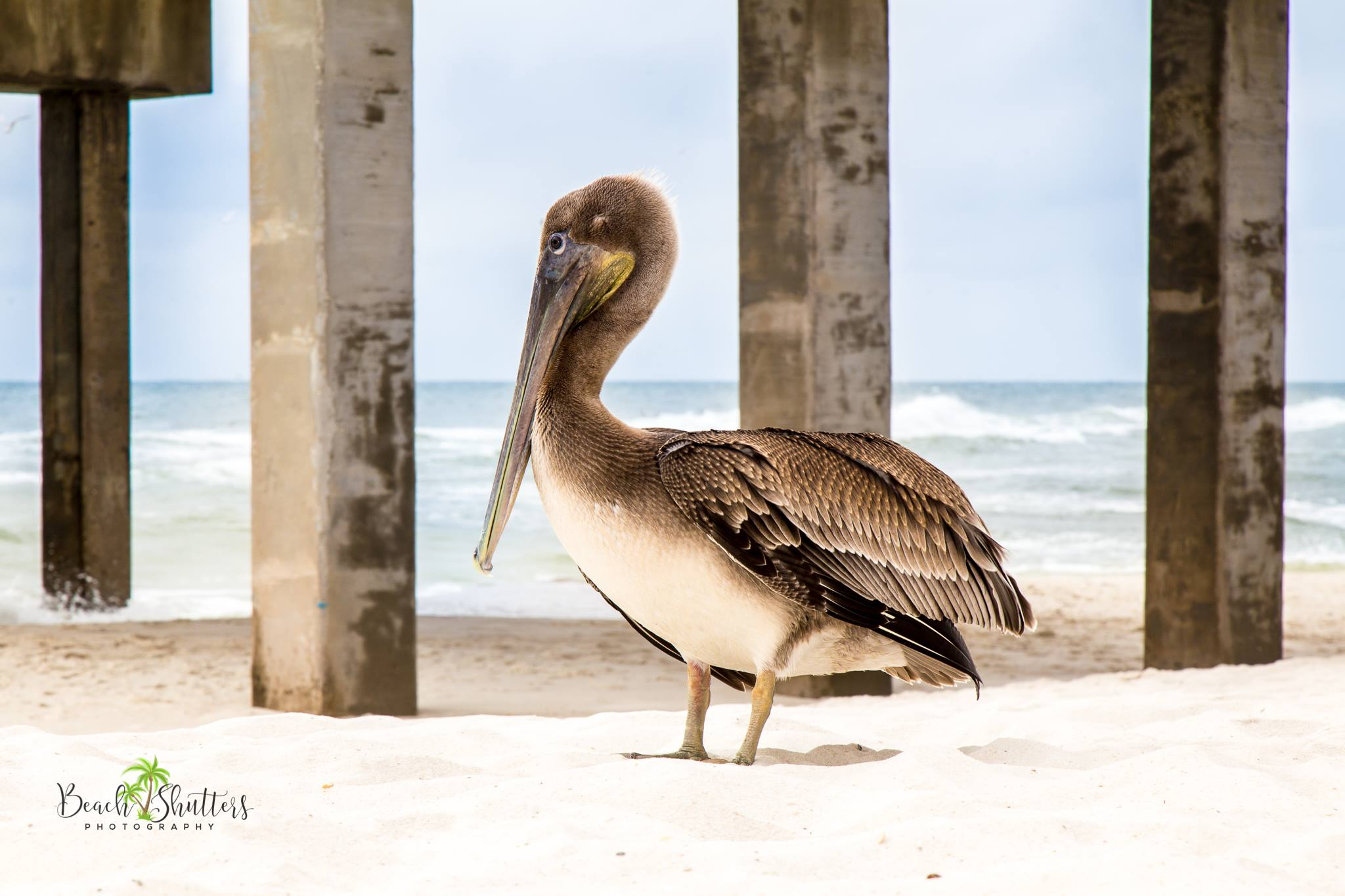 nature beach photographer in Orange Beach Alabama